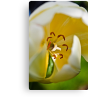 Anatomy of a Tulip: Slice of Life Canvas Print