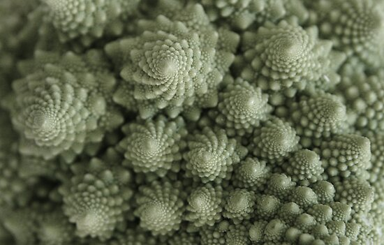 Vegetarian Fractals by Lucy Hollis
