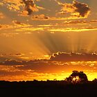 """Godlight"" Morning by bushdrover"