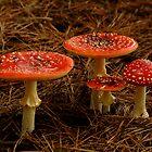 Fungi by Joe Mortelliti
