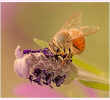 honey-dancing by SharonLea