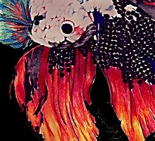 Siamese fighting fish (complete version) by timie
