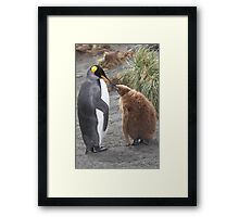 King Penguin and chick ~ Meal Time Framed Print
