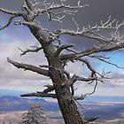 Sandia Peak, New Mexico by saunders24