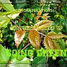 Going Green Runner Up Challenge Banner by kathrynsgallery