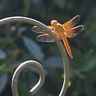 Dragon Fly - Interesting Info. in my details &amp; why we shouldn&#x27;t use pesticides by leih2008