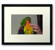 The Love Chain - Bubbles And Sunshine - NZ Framed Print