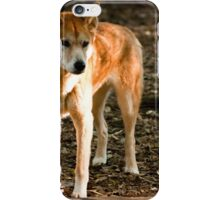 Australian Dingo iPhone Case/Skin