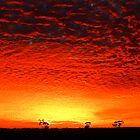 Red Sunrise by Peter Hodgson