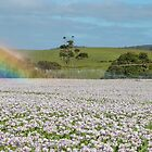 Sisters Creek Sprinkler Rainbow by Paul Campbell  Photography