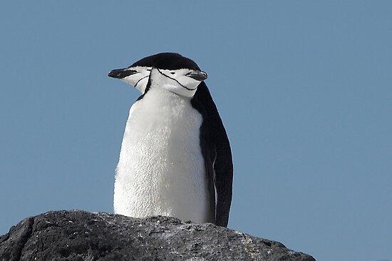"Chinstrap Penguins ~ ""Cliff Top Power Nap"" by Robert Elliott"