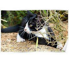 Aww!!..That One Got Away! - Spike Kitten - NZ Poster