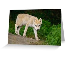 Arctic Wolf Pup on Rock Greeting Card