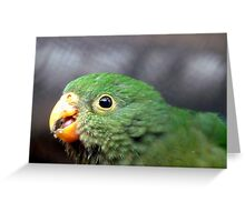 The King's Baby - Baby King Parrot - Gore Southland Greeting Card