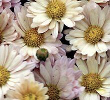 flowers 35 by Kittin
