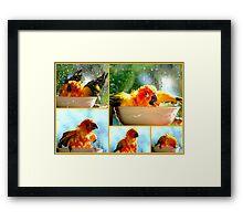 The Joy of Bathing!! - Sunshine - Sun Conure - NZ Framed Print