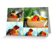 The Joy of Bathing!! - Sunshine - Sun Conure - NZ Greeting Card