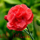Thank you! - Red Carnation - Southland NZ by AndreaEL