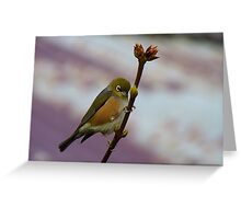 Is it Winter Or Spring? - Silver-Eye - Southland NZ Greeting Card