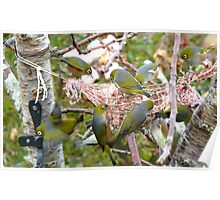 The Bird Feeder! Silver-Eyes Feeding - Soutland NZ Poster
