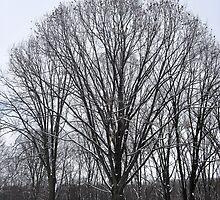 Thats a Big Tree  by Lyndsay81