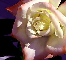 Rose 12 by Kittin