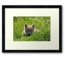 If they could only stay so young - Arctic Wolf Pup Framed Print