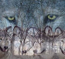 Can you see the wolves for the trees? by timbrewolf