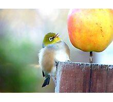 WOW! Is This The Big Apple! - Wax-Eye - NZ Photographic Print
