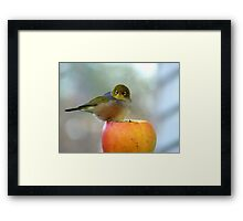 If This Is The Big Apple, I Must Be King Kong! - Silvereye - NZ Framed Print