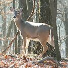 Doe in the Park by Jim Caldwell