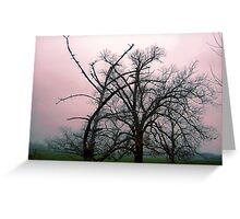 Trees in mist, Gippsland  Greeting Card