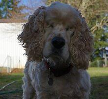Tobey the Blind Farm Dog by DuckDuckDog