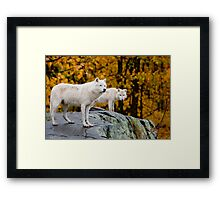 Arctic Wolves On Rocks Framed Print