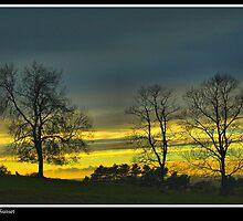 Dyrham Trees by wiseowl2503