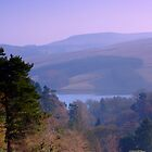 Goyt Valley Morning by Bernard Cavanagh