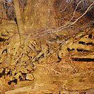 Beyond the Soil by rarmermann