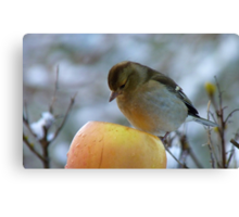 Awww!! Do I Really Have To Eat This - I Don't Need To Go On A Diet!! - Female Chaffinch Canvas Print