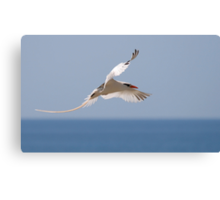 Longtail of Peace Canvas Print
