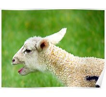 I Want My Mhaaaaaa!!! - Lamb - NZ Poster