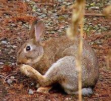 Underfoot Pine Needles Are A Pain In The...Wild Bunny/Hare - NZ  by AndreaEL