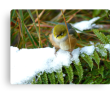 """Gosh!! How On Earth Will I """"FERNish This Place? - Silver-Eye - NZ Canvas Print"""