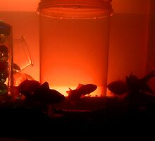 GOLD FIS TANK AQUARIUM by SofiaYoushi