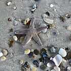 Starfish Ashore by Jenni C