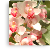 Cluster Of Orchids Canvas Print
