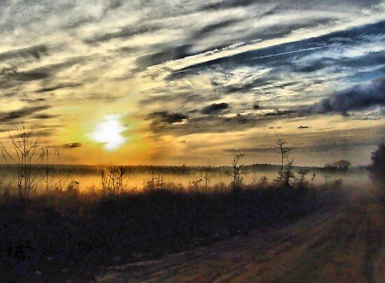 Morning Fog by Suni Pruett
