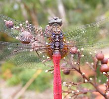 dragon fly wings by ajax