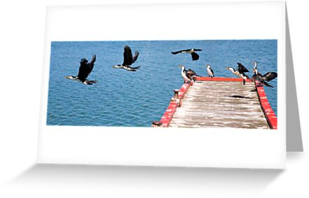 Birds of Lakes Entrance by Rosina  Lamberti