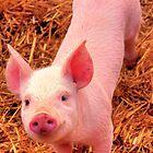 Curious little piggy by nayamina