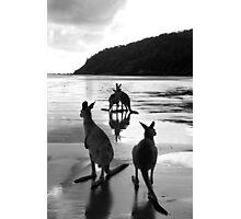 Kangaroos at Sunrise Photographic Print